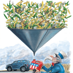 biofuels and the fuel shortage Because so much food and feed is now diverted to produce fuel, and so much land is now used for biofuels feedstocks - corn and sugar for.
